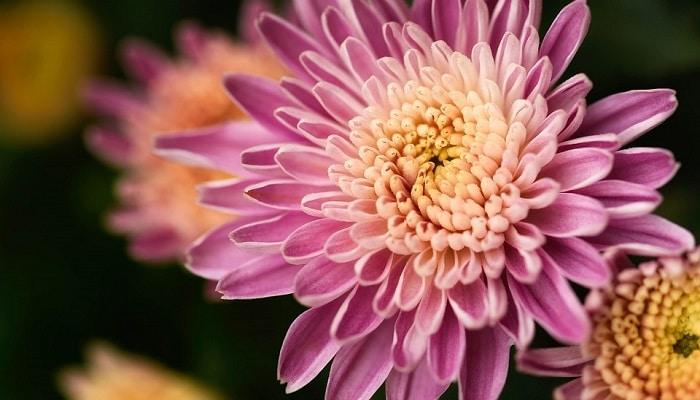la mas bella flor de la amistad