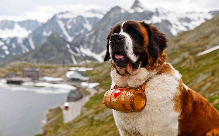cuales son las razas de perros grandes
