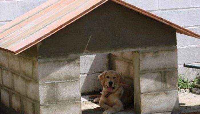 Como hacer una casa para perros te lo explicamos paso a paso - Casa de perro grande ...