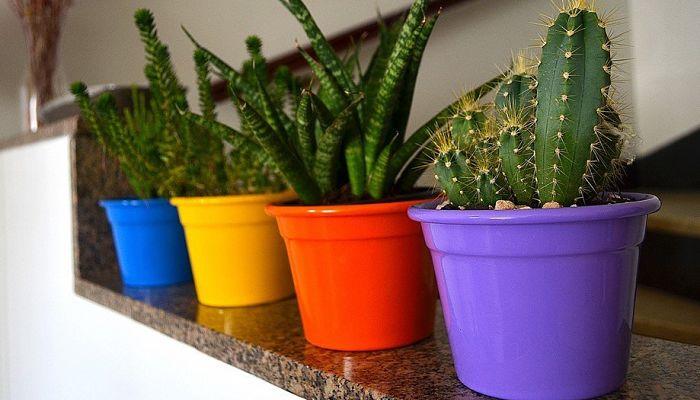 formas de proteger un cactus