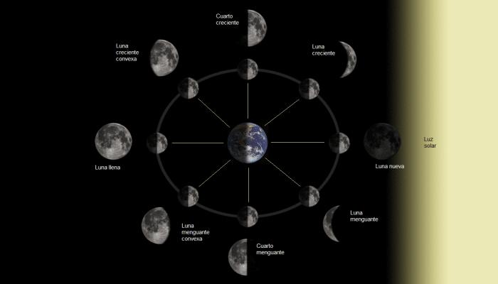 Las 8 fases lunares