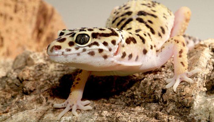 frecuentes animales que se encuentran en el desierto