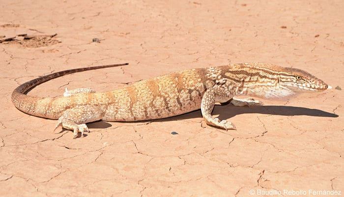 que animales viven en el desierto