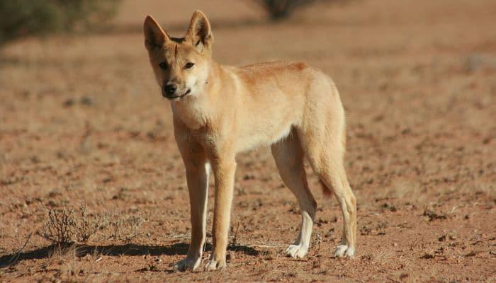 los animales que se encuentran en el desierto
