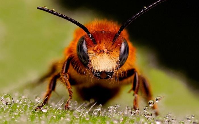 como se comunican las abejas reinas