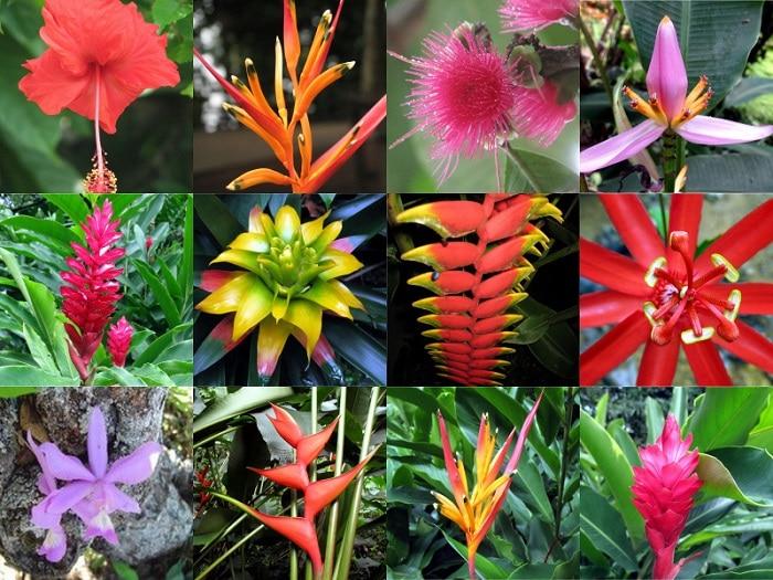 Plantas De La Selva-Lo Que Debes Saber Sobre Estas