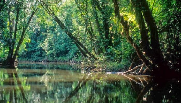 Plantas de la selva lo que debes saber sobre estas ex ticas plantas - Mas goy fornells de la selva ...