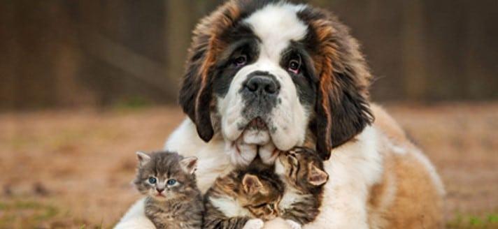 pulgas en perros y gatos