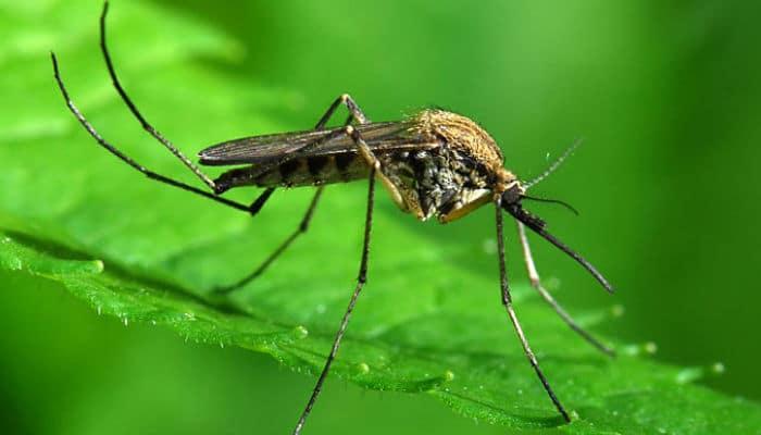 consejos para repeler mosquitos