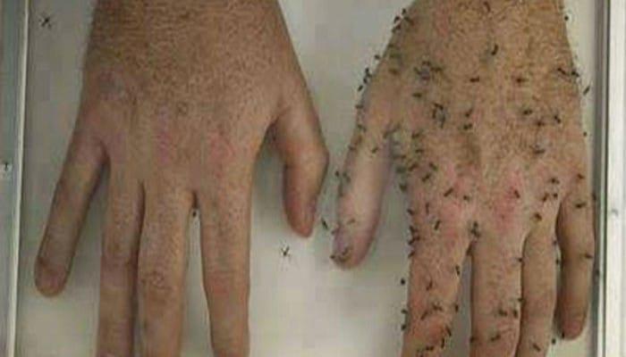 remedios caseros contra los mosquitos muy eficases