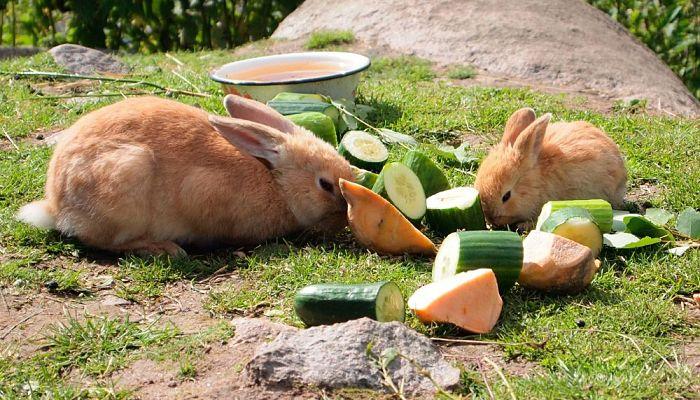 cuidados básicos para los conejos