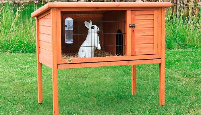 Como cuidar a un conejo consejos dichos por expertos - Casas para conejos enanos ...