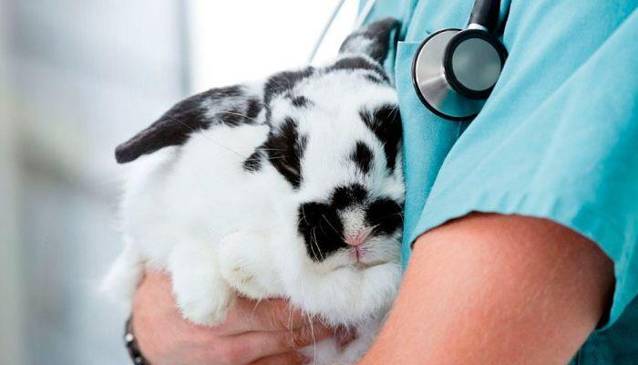 de que manera se cuida a un conejo