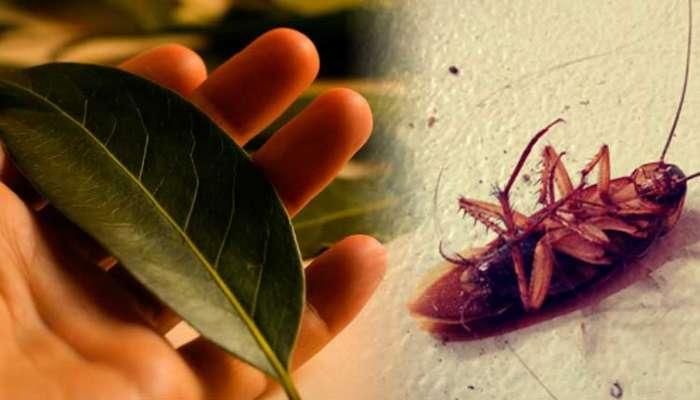 Remedios Para Matar Cucarachas Efectivos