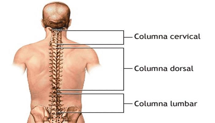 diferentes partes en la columna